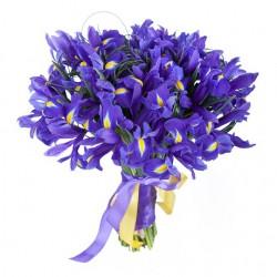 Ирисы – великолепие радуги в цветке