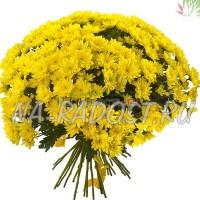 21 желтая кустовая хризантема