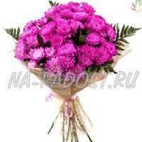 Розовые кустовые хризантемы