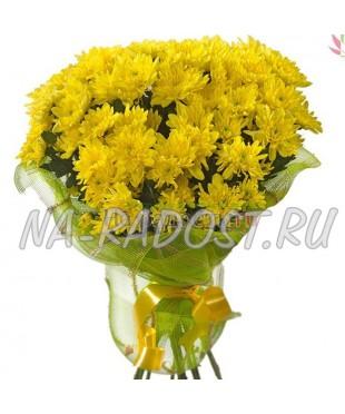 Желтые кустовые хризантемы